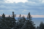 Trees in foreground and Fundy Bay in distance